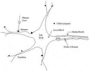 Jaringan Syaraf Tiruan,Neural Network,sejarah Neural Network,definisi Neural Network,pengertian Neural Network,penemu Neural Network,definisi Jaringan Syaraf Tiruan,penemu Jaringan Syaraf Tiruan,teori Jaringan Syaraf Tiruan,sejarah Jaringan Syaraf Tiruan,Pengertian Jaringan Syaraf Tiruan (Neural Network),Inspirasi Jaringan Syaraf Tiruan (Neural Network),Gambar Susunan Syaraf Manusia,struktur Neural Network,inspirasi Neural Network,perkembangan Neural Network,dasar Neural Network,bagian Neural Network,fungsi Neural Network,manfaat Neural Network,aplikasi Neural Network,fungsi Jaringan Syaraf Tiruan,perkembangan Jaringan Syaraf Tiruan,bagian Jaringan Syaraf Tiruan,komponen Jaringan Syaraf Tiruan,Perbandingan Jaringan Syaraf Tiruan Dengan Metode Konvensional